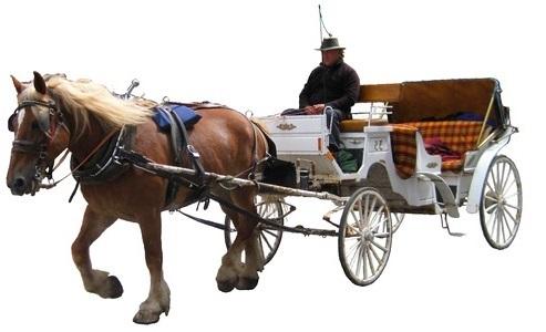Hest og vogn med kusk leies ut til bryllup